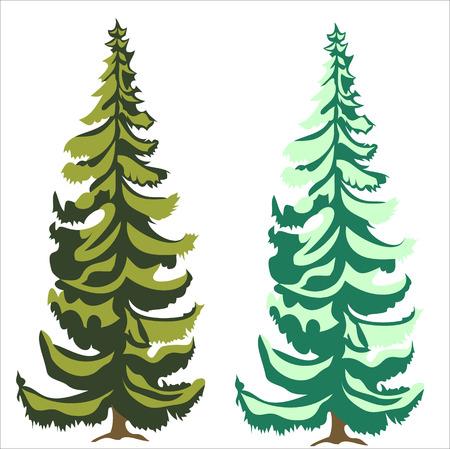 larch: coniferous tree