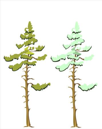 coniferous: coniferous tree