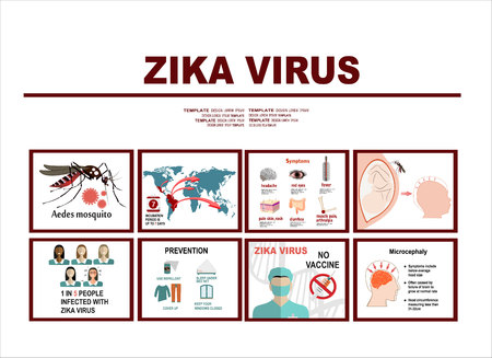 Zika virus infographic elements - prevention, transmission, vaccine, symptoms, microcephaly, protection measures. Zika virus disease. Zika virus design template. Isolated vector illustration. Illustration