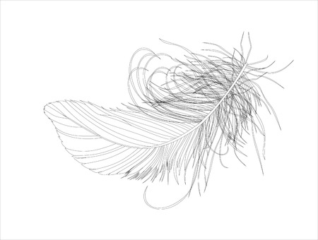waft: Feather on a white background. isolated