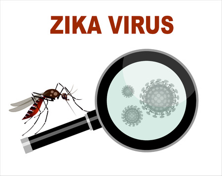 aedes: Spread of zika and dengue virus. (Vector Design) Illustration