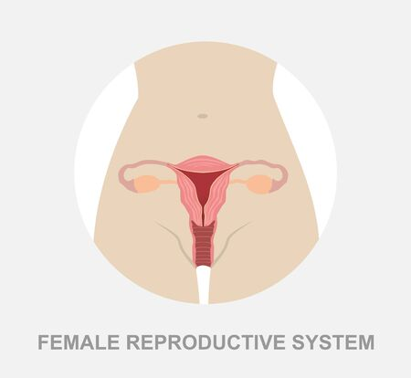 Uterus and ovaries, organs of female reproductive system 일러스트