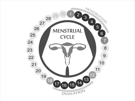 Menstrual cycle. Planner Design. Illustration