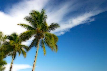 llegar tarde: �rboles de palma tropicales en el sol de la �ltima tarde. Estilizado con la t�cnica de Orton y algo de mis propias ideas. Sea blurry en los tama�os peque�os Foto de archivo
