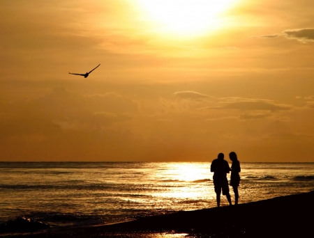 cherish: Couple examining shells on late evening walk on the beach - very romantic scene with a seagull flying over. Updated from earlier upload - silhouette enhanced and bird moved up in sky