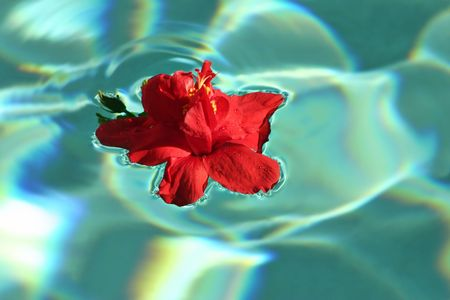 A beautiful flower floating lazily in a pool