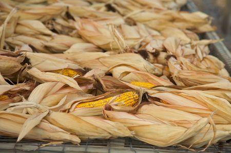 工場で乾燥したトウモロコシ