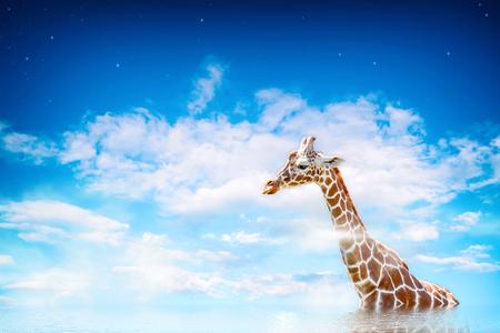 Giraffe in a dream landscape