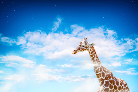Giraffe in a dream landscape