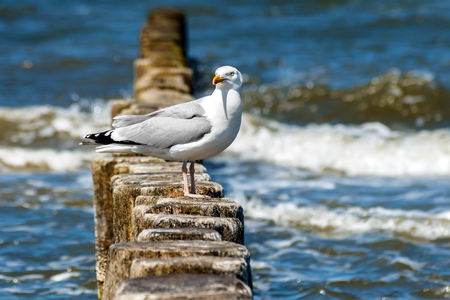 Seagulls on the Baltic Sea beach of Germany