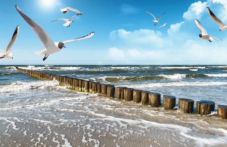 la côte baltique de l'allemagne en été