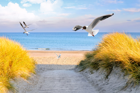 the baltic coast of germany in the summer Stockfoto