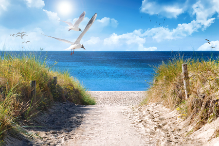 the baltic coast of germany in the summer Stock Photo