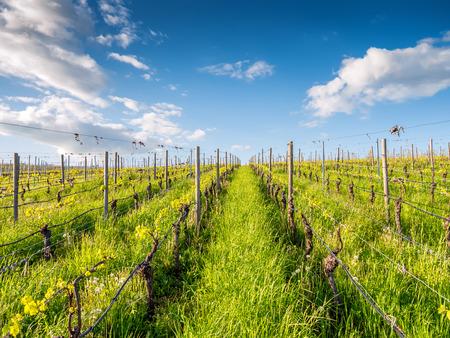 Wine growing area near Würzburg in Franconia