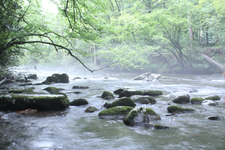 Natural River with Rocks