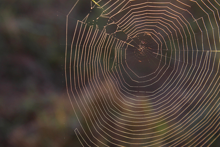 Nature Photography of a Natural Spider Web in the Great Smoky Mountains National Park.