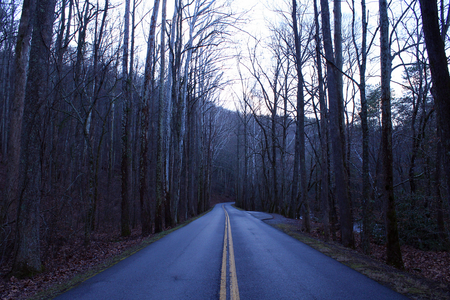 Street Photography of a Long Empty Road in the Woods in the Great Smoky Mountains.