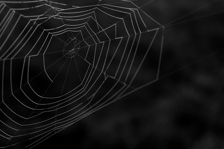 Black and White Macro Photography of a Natural Spider Web. Stock Photo