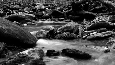 Black and White Photography of a River in the Woods of the Great Smoky Mountains National Park.