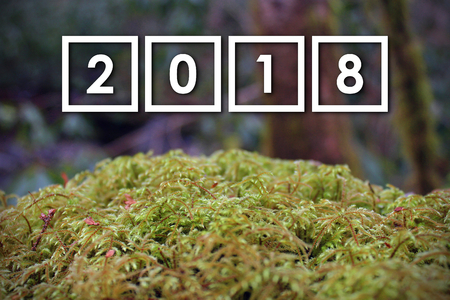 2018 New Year Numbers Letters over a Moss Covered Green Stone in the Woods, with Blurred Background.