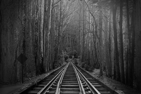 Black and White Photography of Train Tracks or Rail Roads in the Magical Fantasy Forest Woods.