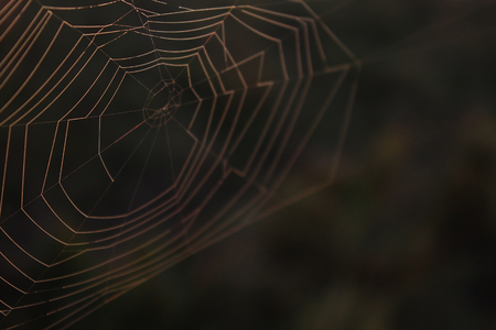 Spiderweb Macro Nature Photography of a Spider Net in the Woods. Stock Photo