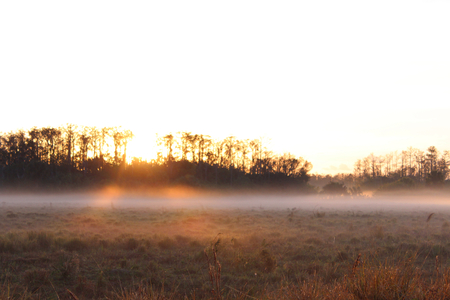 Bright Sunrise on a Field with Heavy Fog and Dew on the Grass.