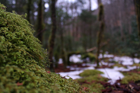 Macro Nature Photography of Moss Covering a Stone in the Deep Woods.
