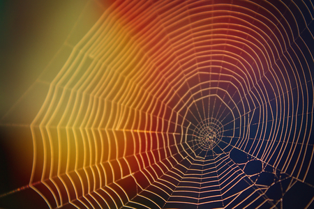 Abstract Nature Photography of Spider Web in the Sunlight with Many Colors Yellow and Blue.
