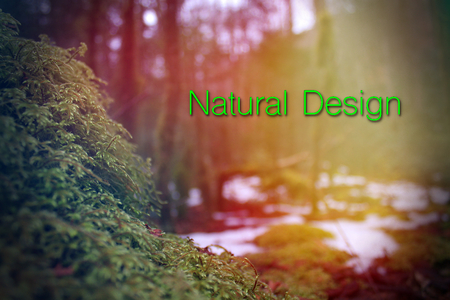 Nature Design Words Photography with Typography Lettering in the Forest.