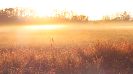 Nature Photography of an Sunrise over a Farmers Field with Mist and Dew.