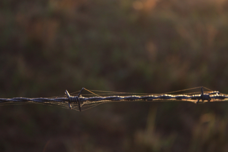 Rusty Old Barbed Wire with Some Spider Webs on it. Stock Photo