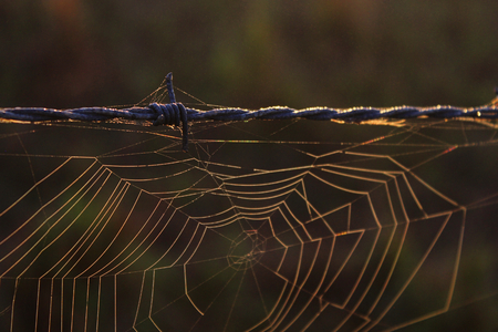 Spiderweb Nature Photography of a Spider Web on a Barbed Wire. Stock Photo