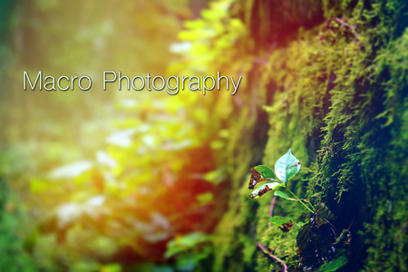 Nature Macro Photography with Typography Words Letters in the Woods Next to Small Sprouting Green Plant.