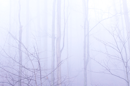 Deep Forest with Heavy Fog and Mist with a Misterious Look and Feel.