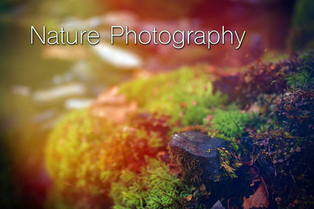 Graphic Design Words Nature Photography Typography Lettering in the Natural Woods Stock Photo
