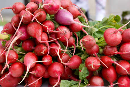 bunches of red radishes at a organic produce stand at farmers market