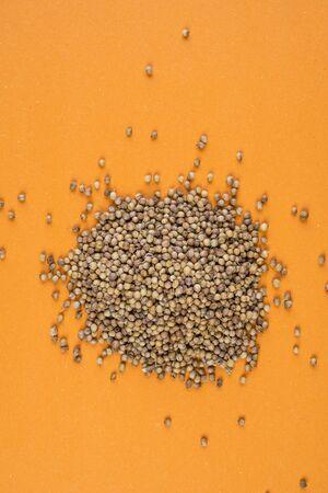 coriander on an orange background