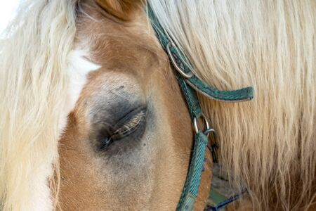 Eye of a horse in close-up view 版權商用圖片