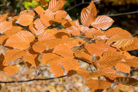 dry autumn leaves with branch