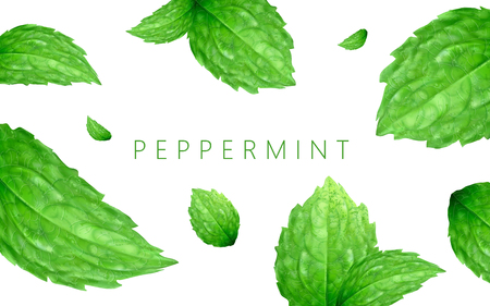 Peppermint background design, refreshing leaves floating in the air, 3d illustration