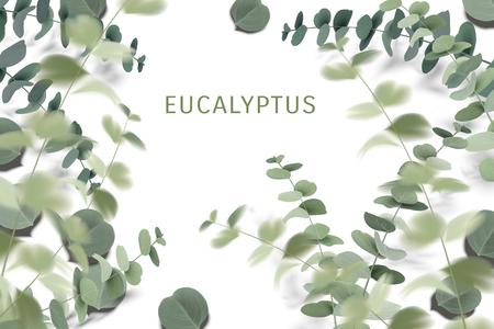 Elegant eucalyptus leaves, lively green plants isolated on white background.