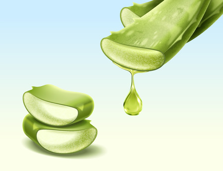 Aloe Vera plant with its section in 3d illustration