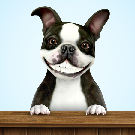 Smiling boston terrier in black and white standing on wooden table in 3d illustration