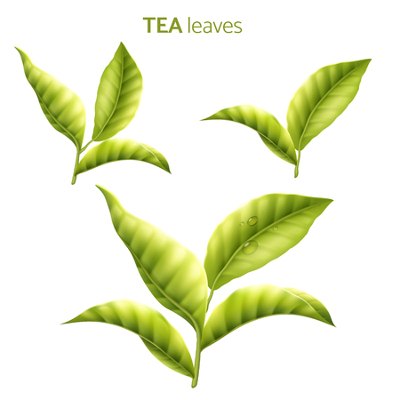 Tea leaves with condensation in 3d illustration on white background