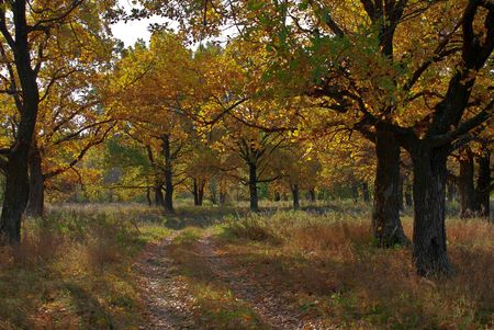 the soil road through the autumnal oak-wood Stock Photo - 4165309