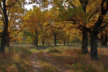 the soil road through the autumnal oak-wood Stock Photo - 4165309