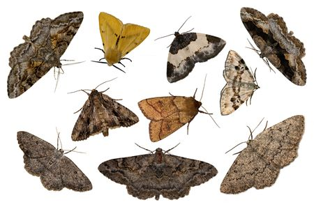 Ten night moths on the white background
