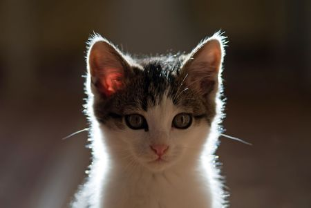 young small cat looking at the camera Stock Photo
