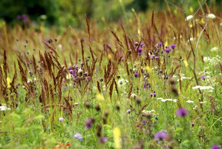the forb meadow  with bright multicolored flowers